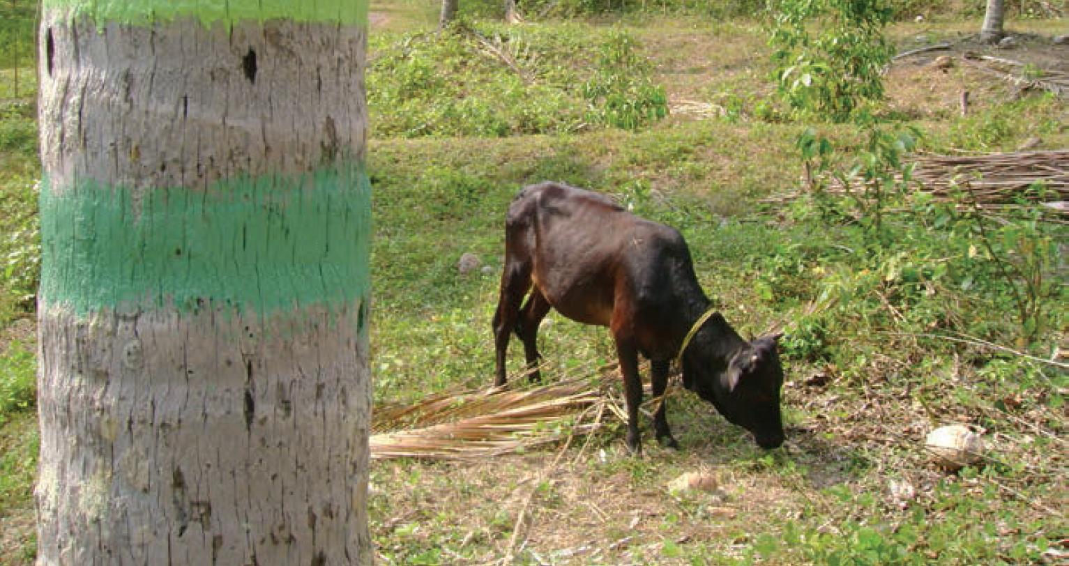 sri-lanka-dairy
