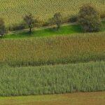 Croplands 4 detail