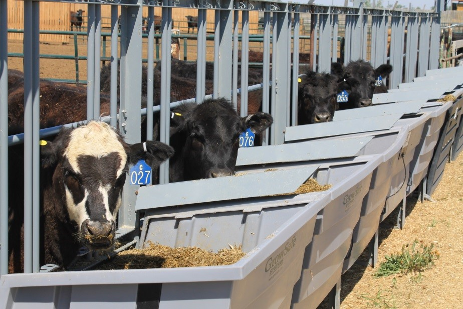 Use of the GrowSafe system to monitor feed intake of cattle at the Lethbridge Research Centre