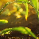 croplands-1-112272227