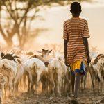 livestock-1-122058730
