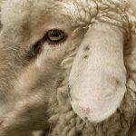 livestock-4-95792620